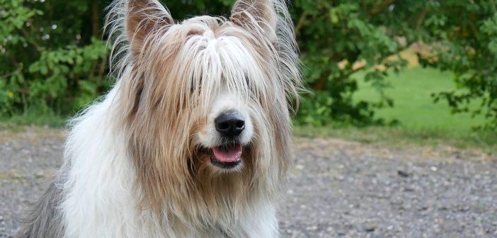 """È un cane il co-protagonista di """"Clic"""" il primo selfiefilm della storia del cinema"""