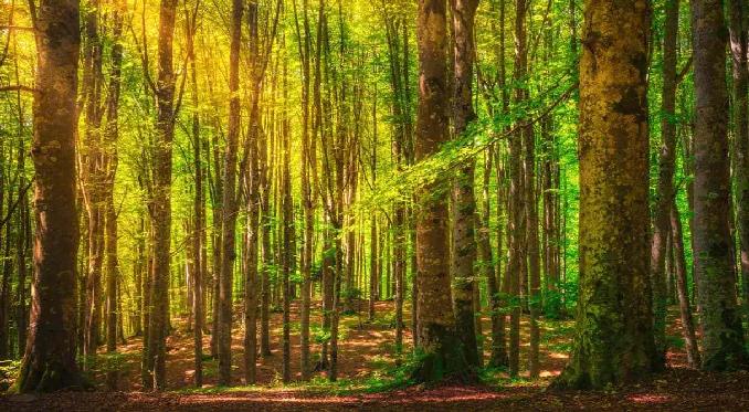 I boschi fatati che evocano scenari fiabeschi