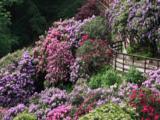 conca_rododendri