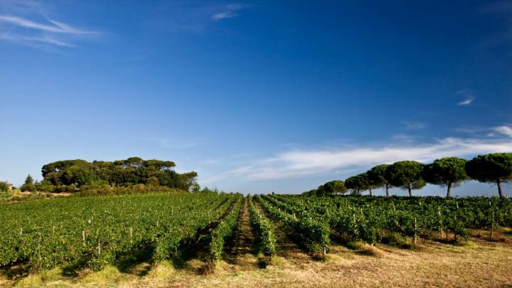 Cantine aperte Lungarotti: vino cultura e bere consapevole