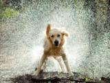 Italia Allarme caldo per tutti gli animali: dall'Enpa un vademecum per proteggerli