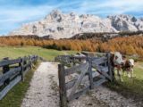 I sapori dell'Autunno in Alta Badia