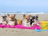animal spiaggia