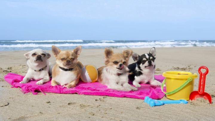 Estate e animali: Spiagge animal friendly